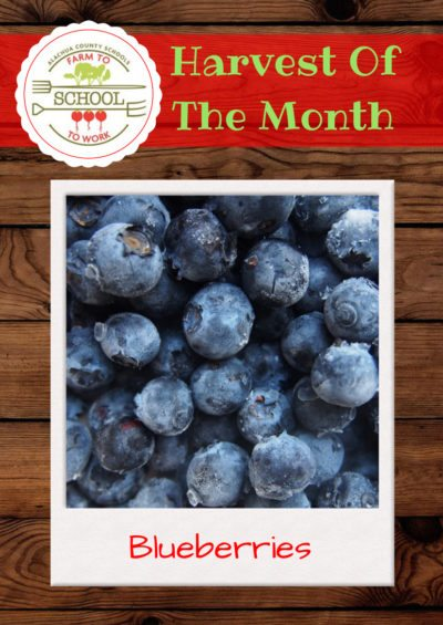 Harvest of the Month: Blueberries