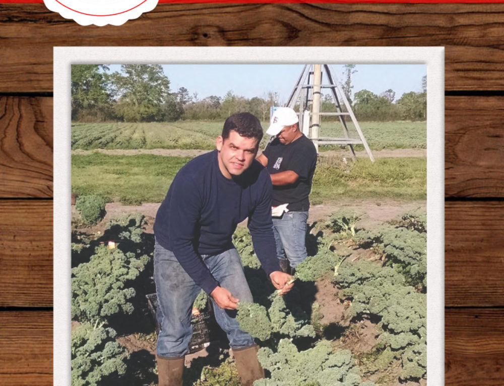February Harvest of the Month: Kale