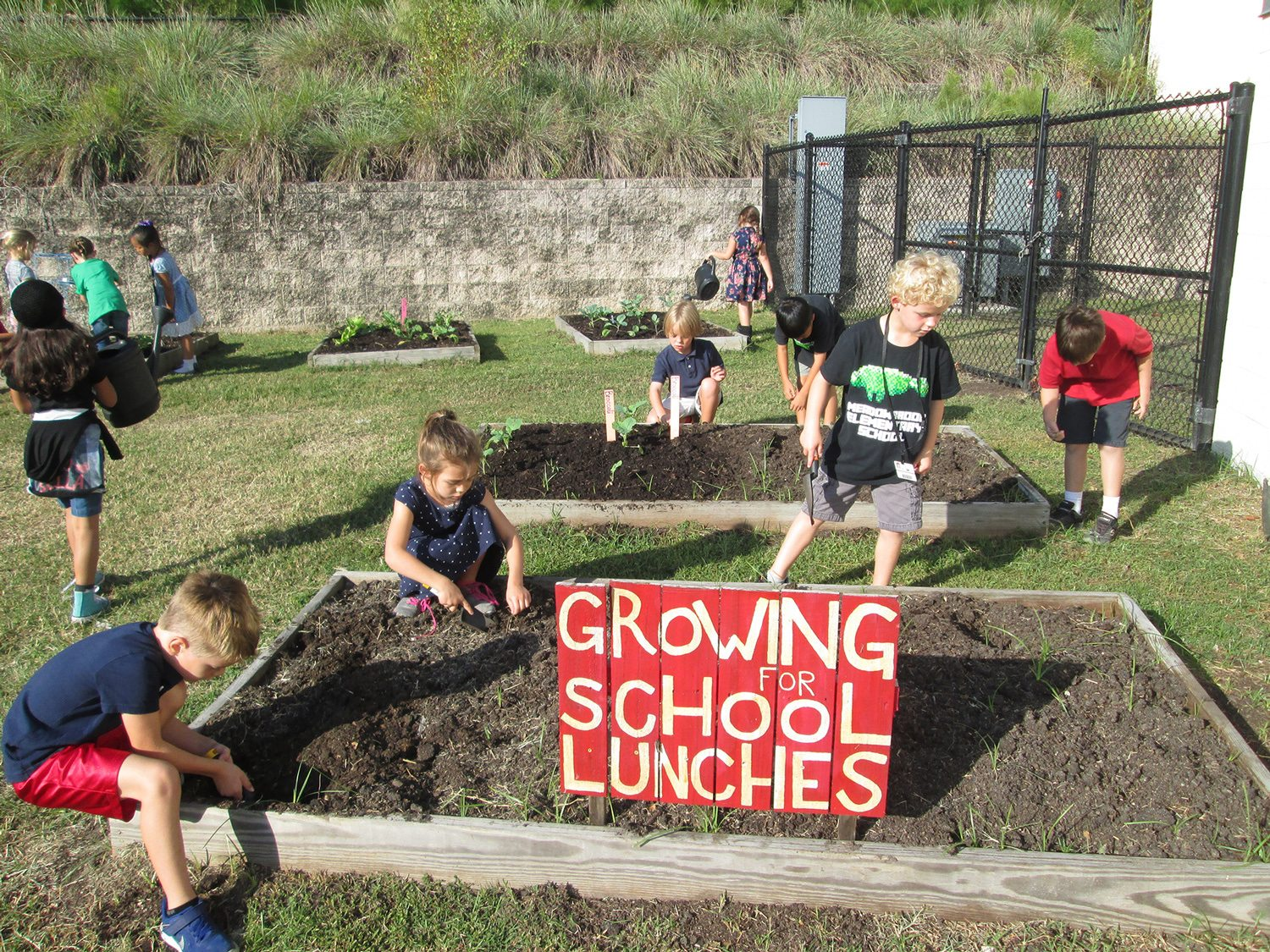 Students planting in their school garden