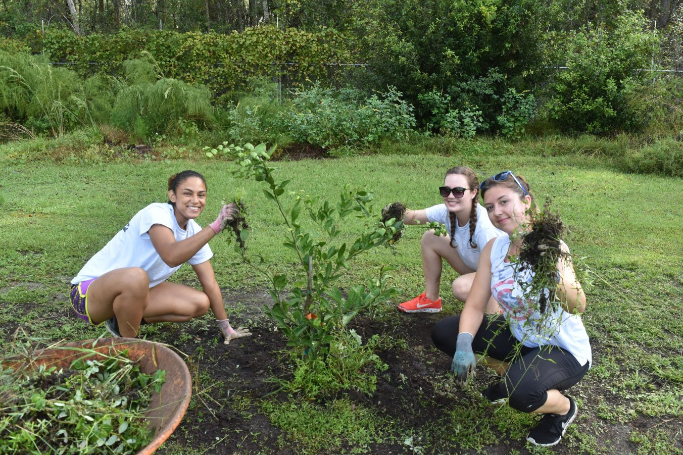 Delta Nu Zeta sorority sisters weeding the orchard post-Irma rains.