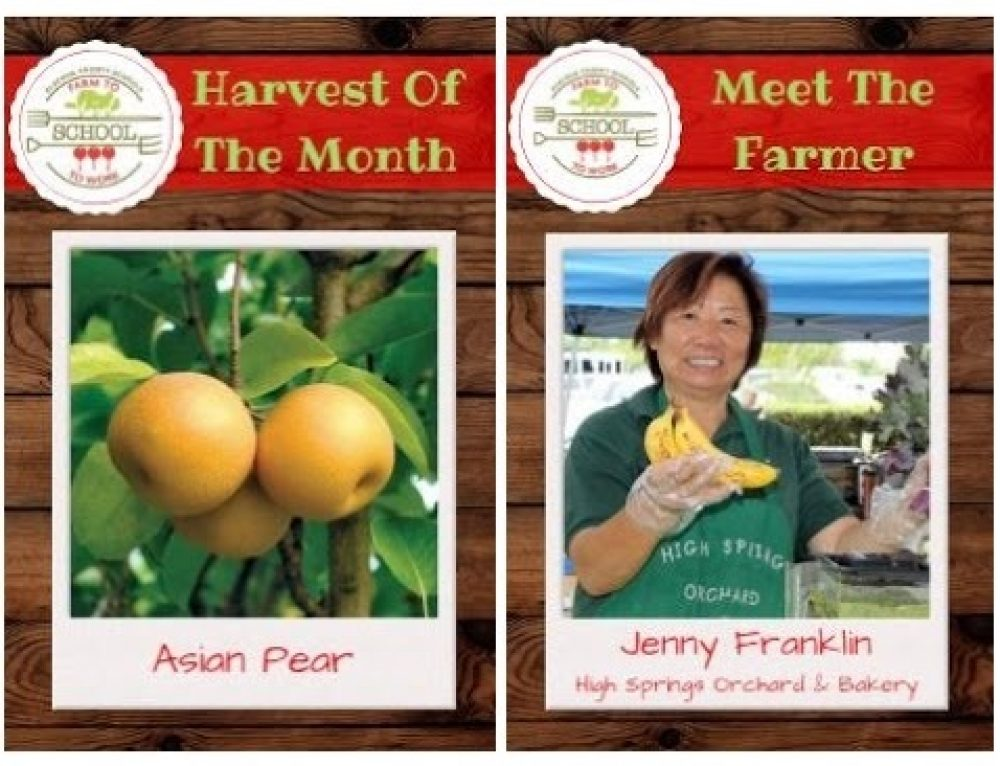 Harvest of the Month: Asian Pears