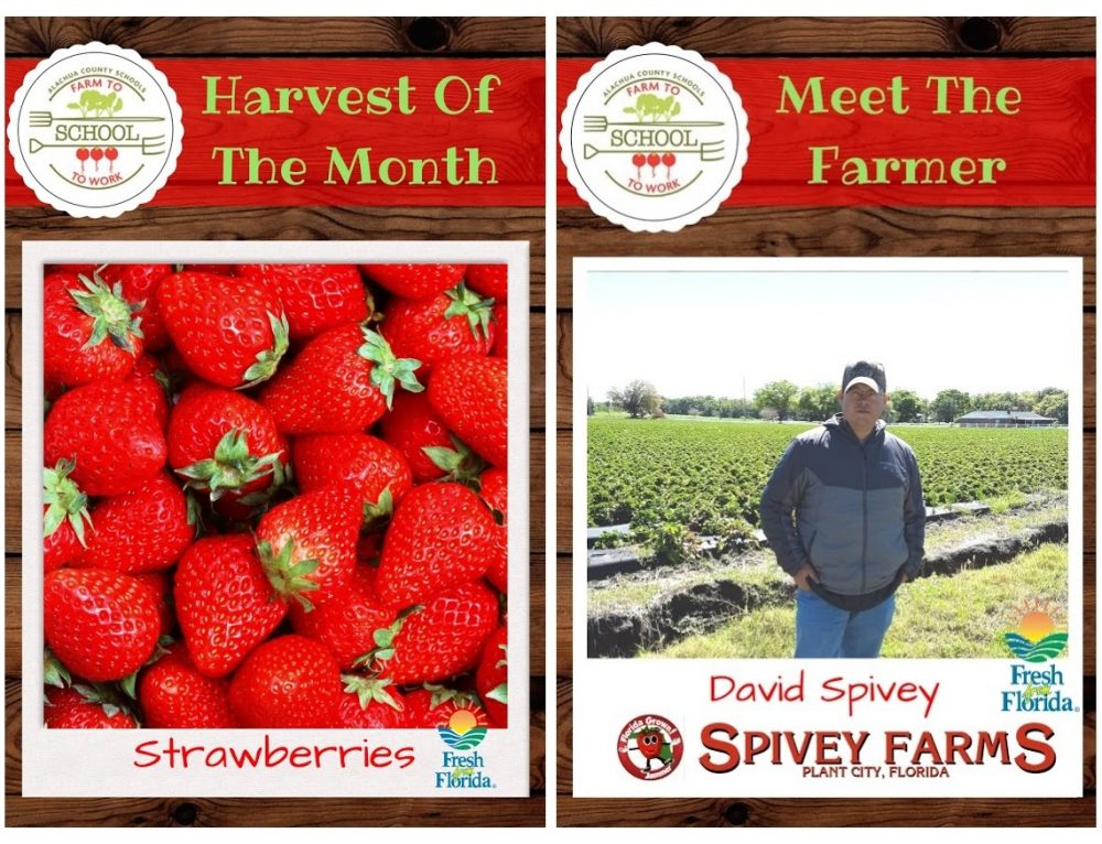 HARVEST OF THE MONTH: Strawberries!