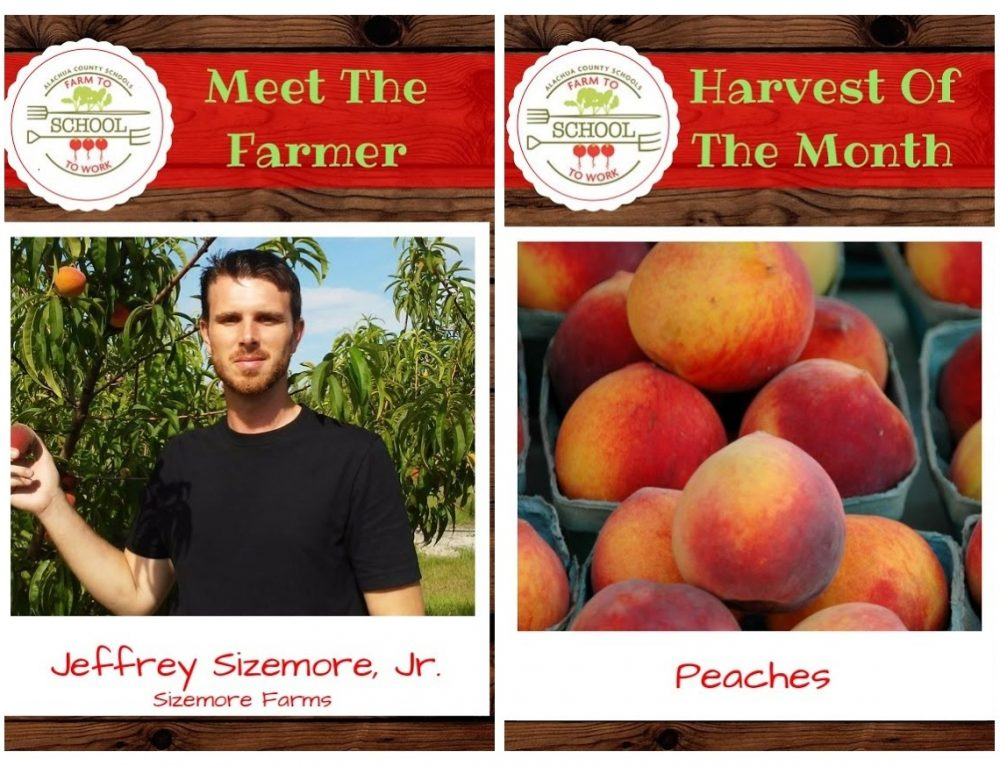 HARVEST OF THE MONTH – Peaches!