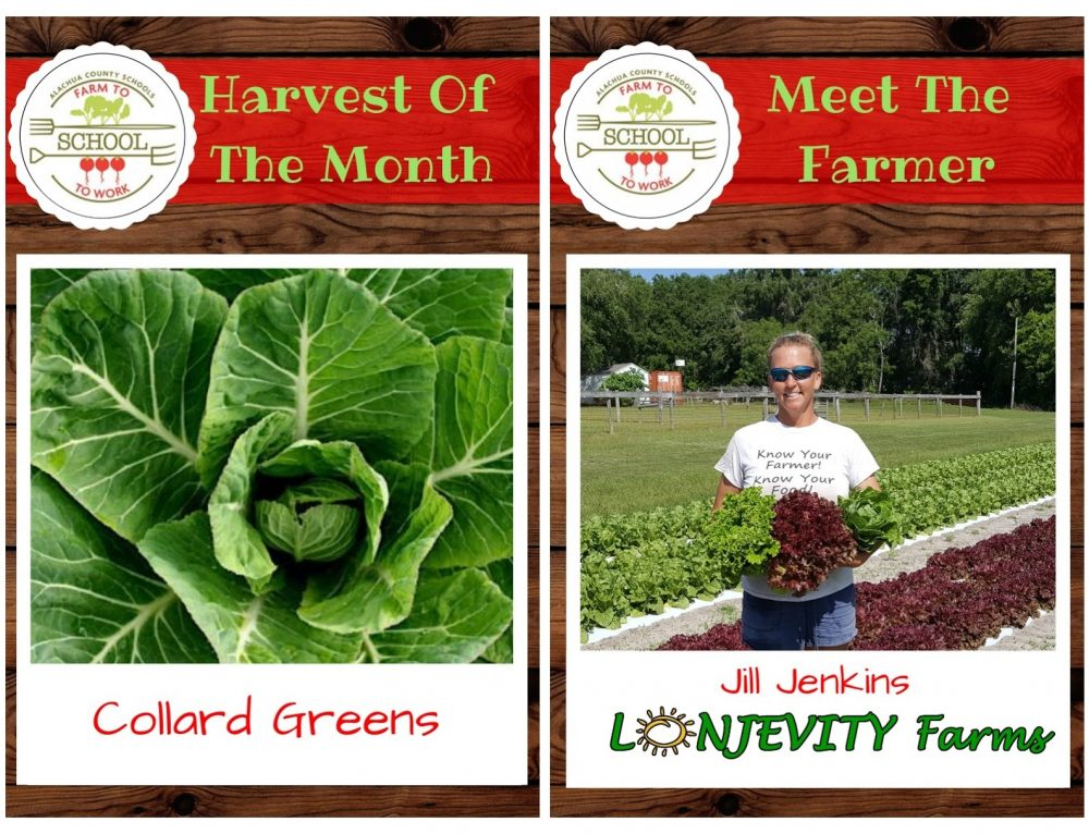 HARVEST OF THE MONTH – Collard Greens