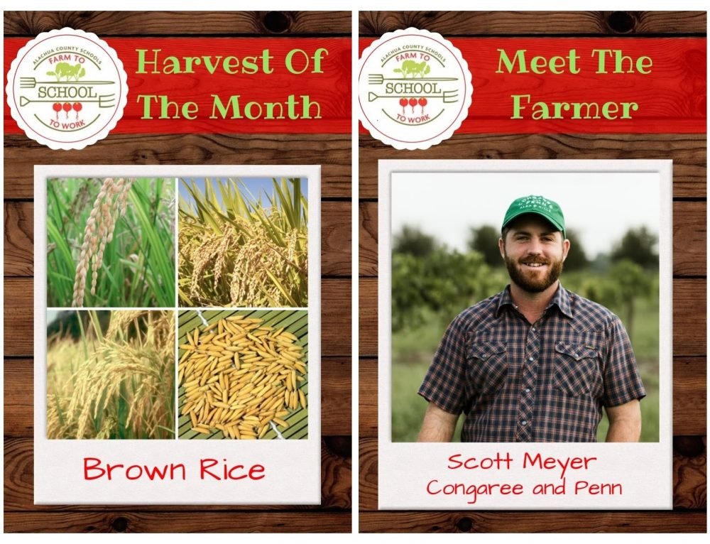 HARVEST OF THE MONTH: Brown Rice