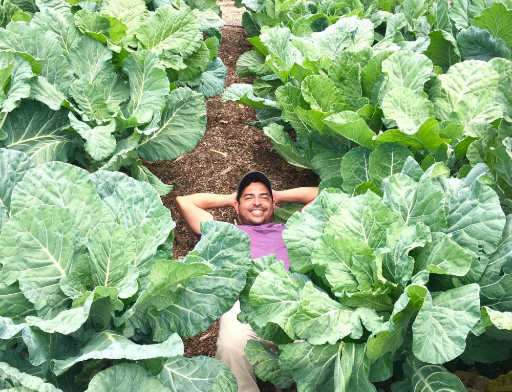 'Tis the Season – for Collards!