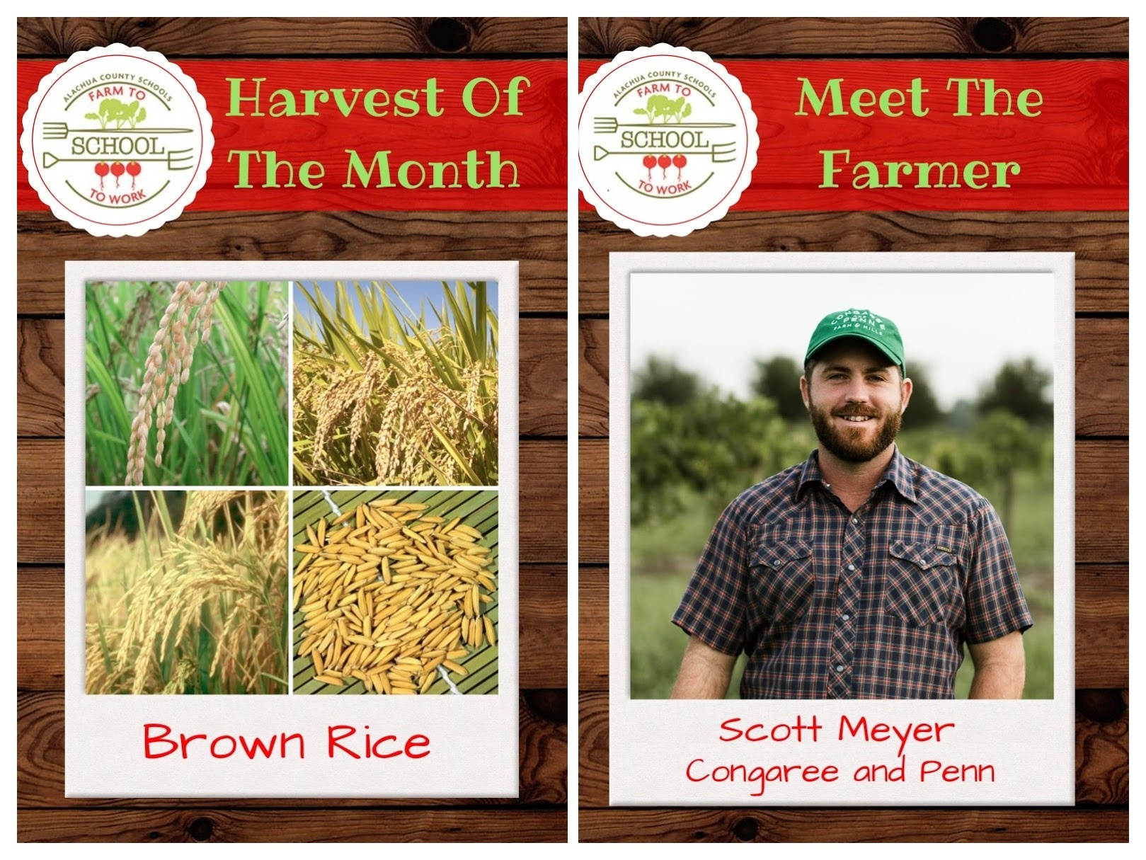 JANUARY HARVEST OF THE MONTH: Brown Rice