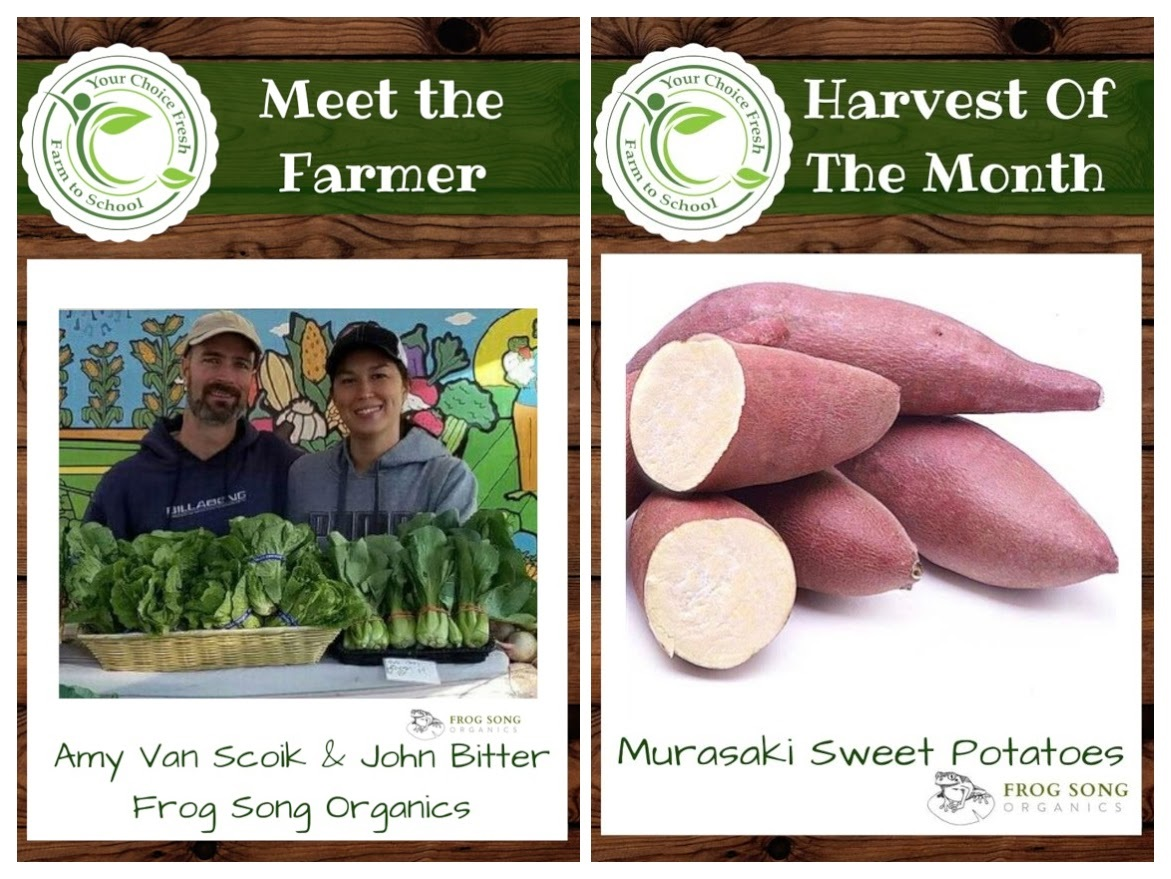 FEBRUARY HARVEST OF THE MONTH: Murasaki Sweet Potatoes
