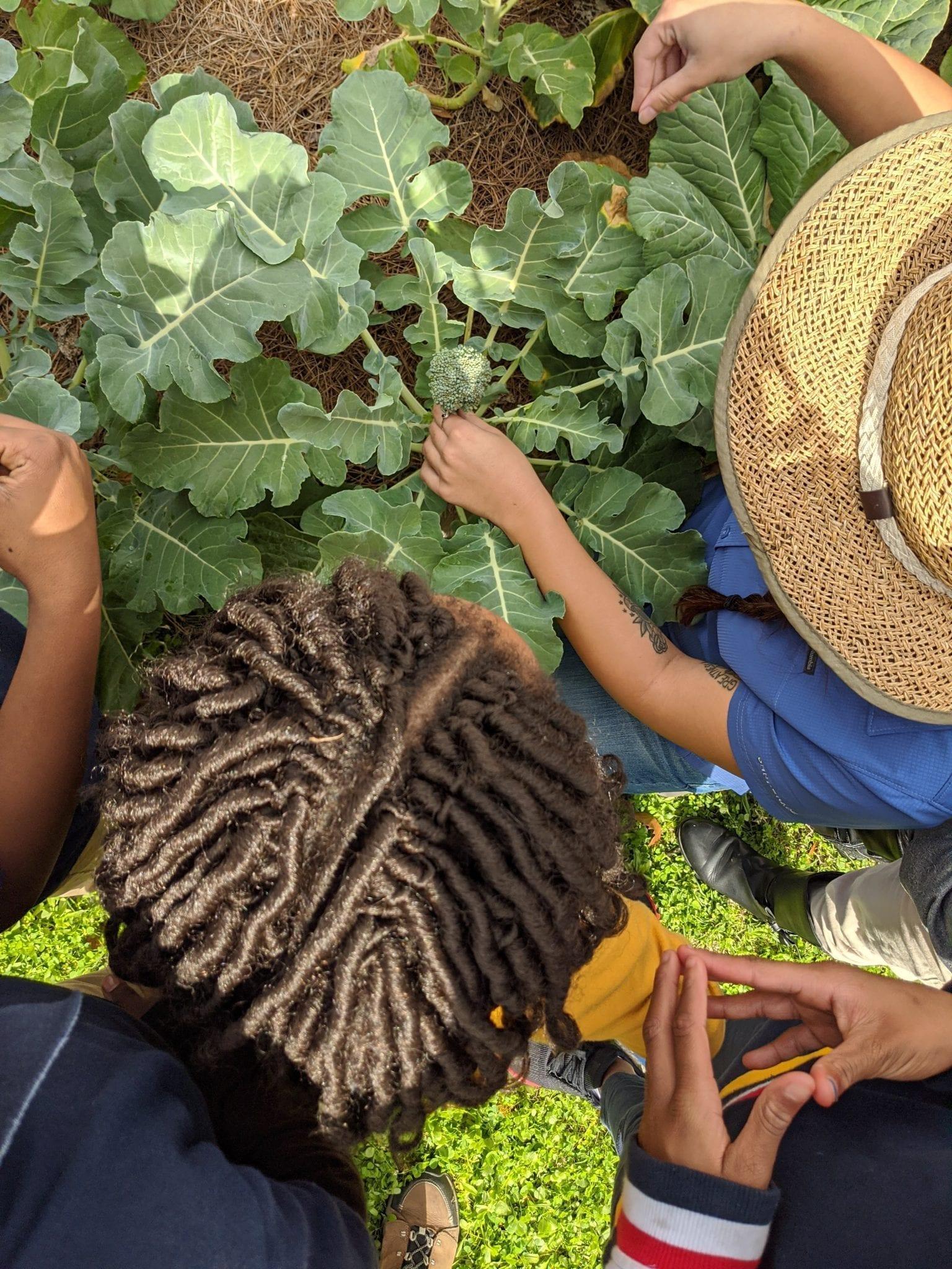 School Gardening during a Pandemic