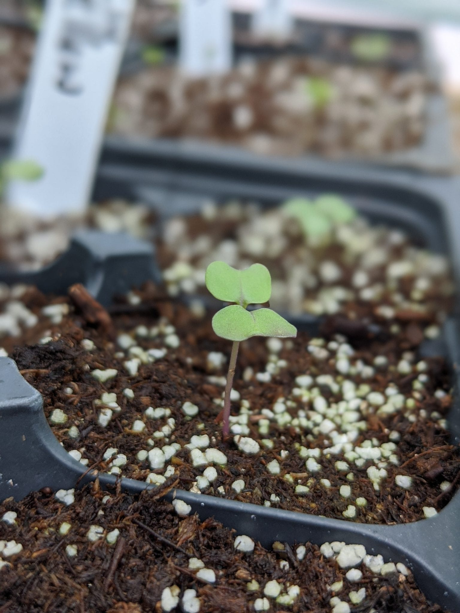 Sowing Seeds and Transplanting Seedlings